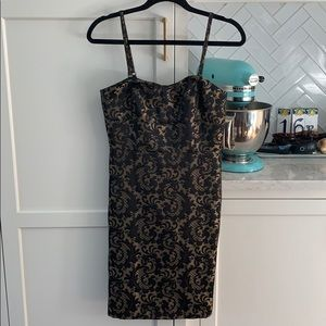 NWT Loft Petite Lace Dress
